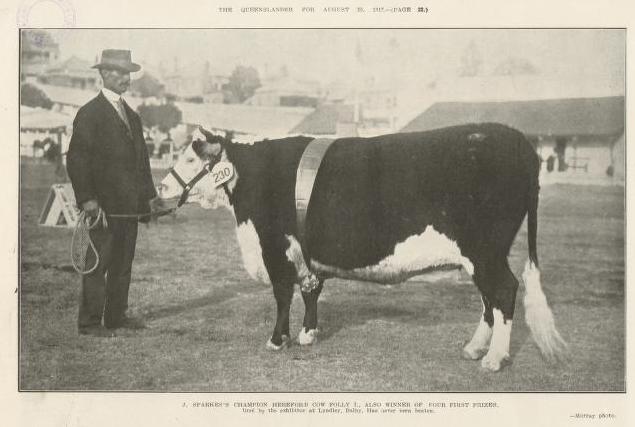 Cattle | RARE BREEDS TRUST OF AUSTRALIA | TidyHQ